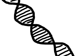 Herramientas para transcripción reversa de ADN